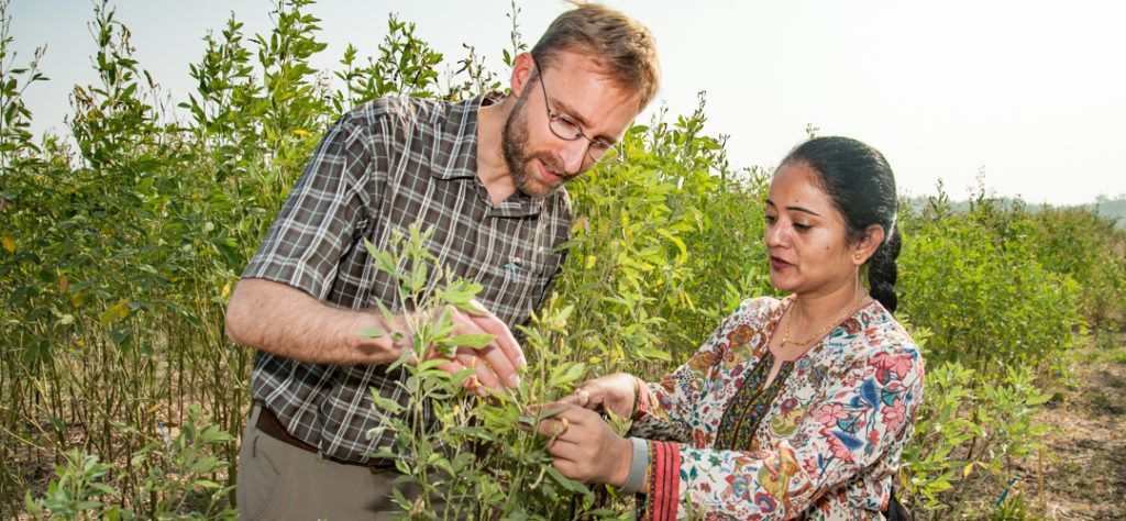 Taming the Wild Pigeonpea