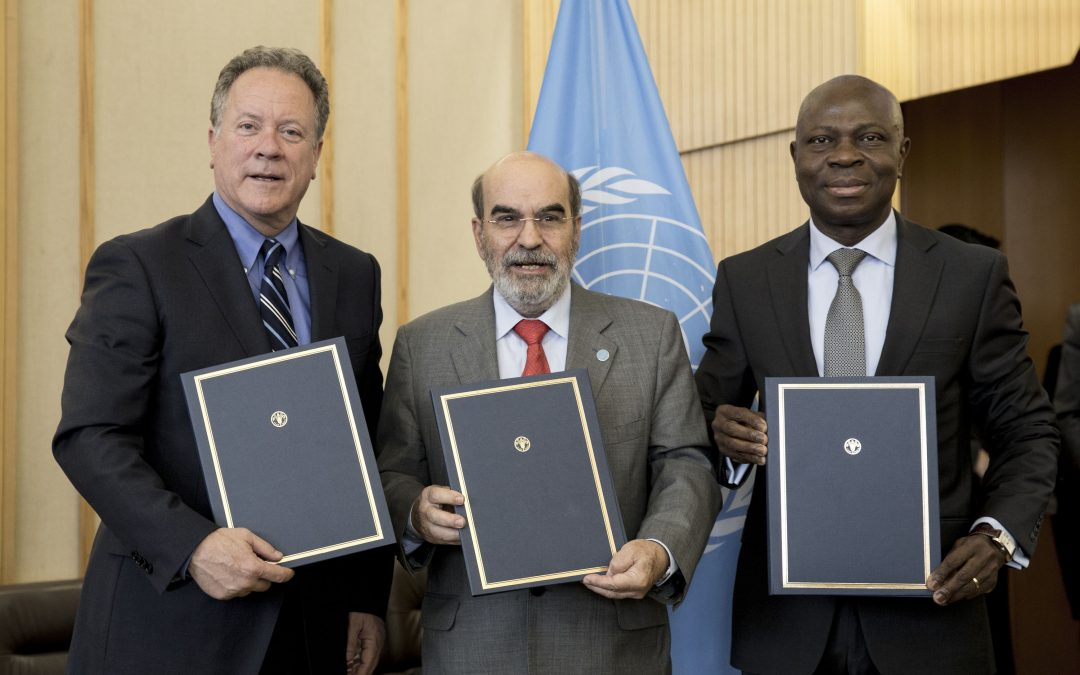 UN Food Agencies commit to deeper collaboration to achieve Zero Hunger