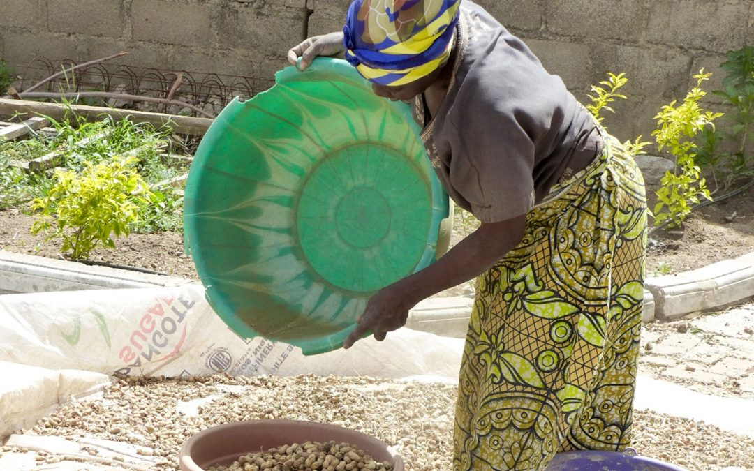 Empowered Women and an Enriched Community: The Groundnut Story of Northern Nigeria