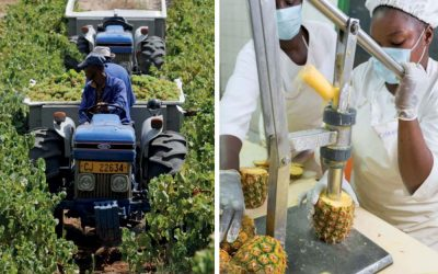 Mechanized: Transforming Africa's Agriculture Value Chains
