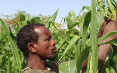 Learning from Plant Protection Regulatory Data and Fall Armyworm in Africa