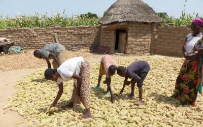Jakunbe: New sorghum variety making a difference in lives of Burkina Faso farmers