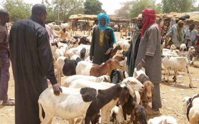 Livestock value chain strengthening essential for improving production and food security in Niger, say scientists