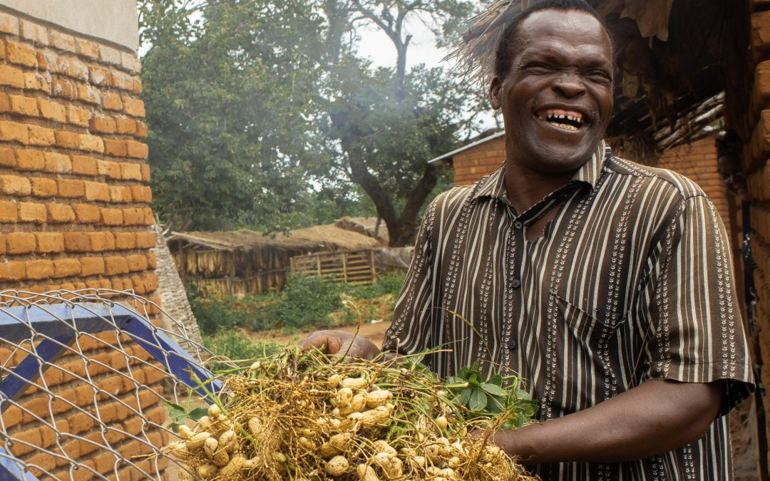 New groundnut varieties for improved resilience and market competitiveness