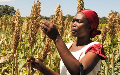 Farmers in Tanzania urged to embrace drought tolerant crops