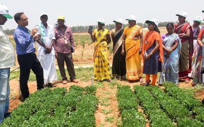 Seeding entrepreneurship in groundnut farmers  of south India