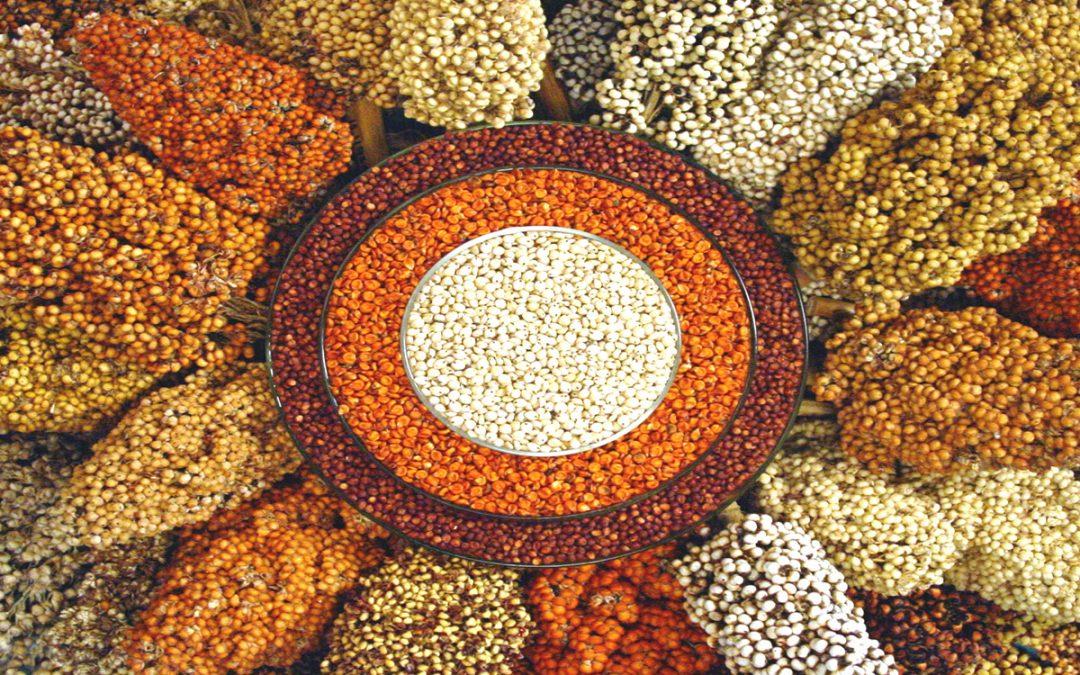Millet consumption survey provides largest baseline for India