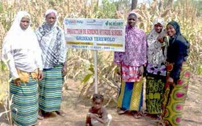 Knowledge + passion: Women's recipe in millet and sorghum production in Mali