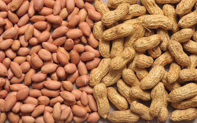 Helping groundnut retain its place in Nigeria through the Tropical Legumes Project