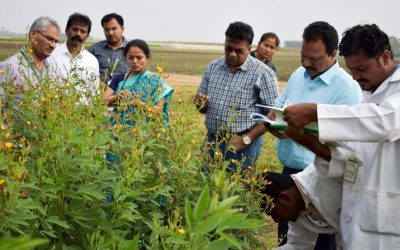 Multi-location evaluation of six pigeonpea pre-breeding lines through India's national program