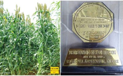 Forage sorghum hybrid hailed as a landmark cultivar in India