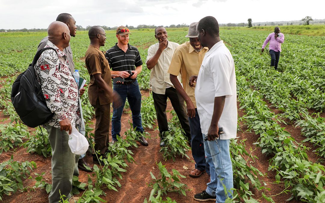Consolidated efforts to modernize crop improvement in Ghana