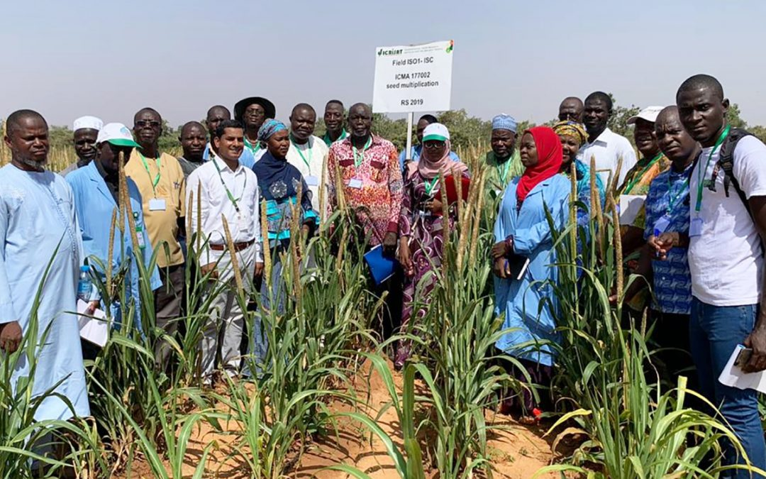 Setting the stage for hybrid pearl millet research consortium in West Africa