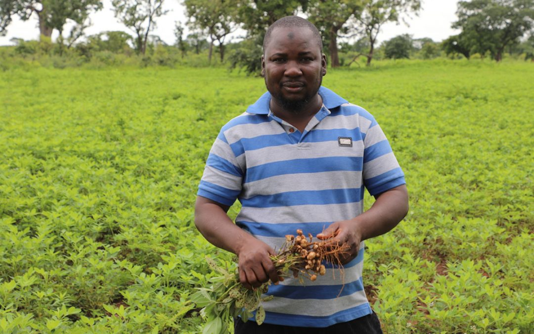 Hand-holding outgrowers to produce certified seed in drought-stricken Ghana – a model to emulate