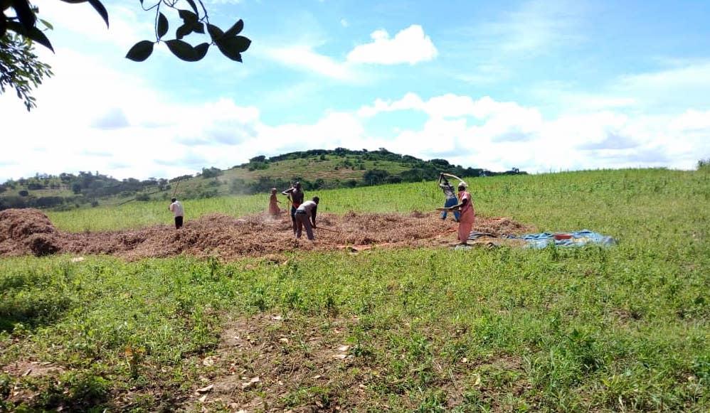 Farmers in the Kyazanga Cooperative Society Ltd. prepare land for planting.