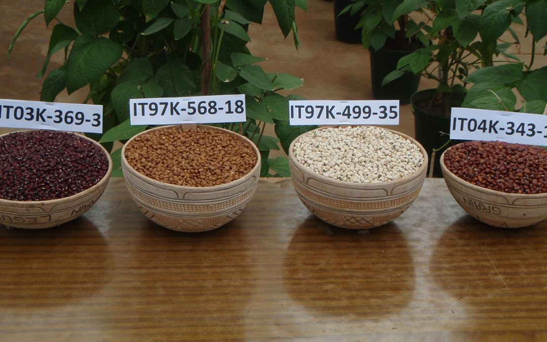 Cowpea receives more research support