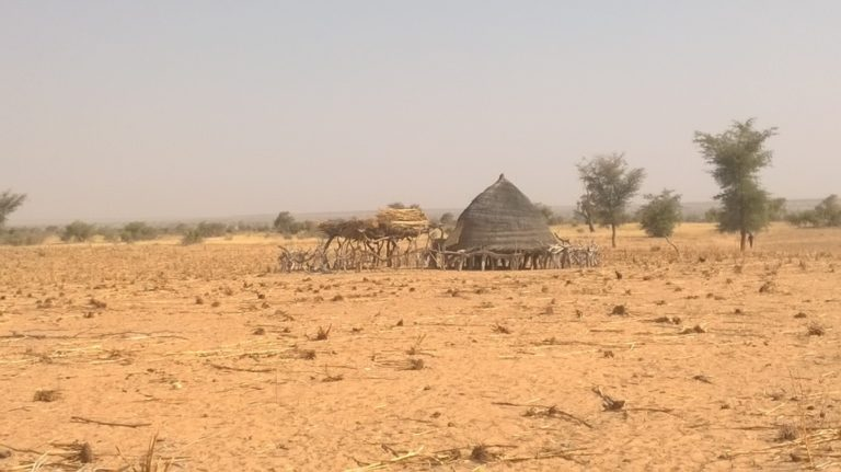 Brokering research crucial for climate-proofing drylands