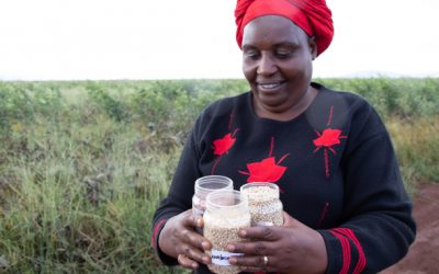 Promoting better agricultural practices of drought-tolerant crops in farming communities
