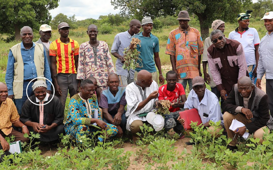 Certified seed fetches twice the market rate: Farmers hitch onto seed production