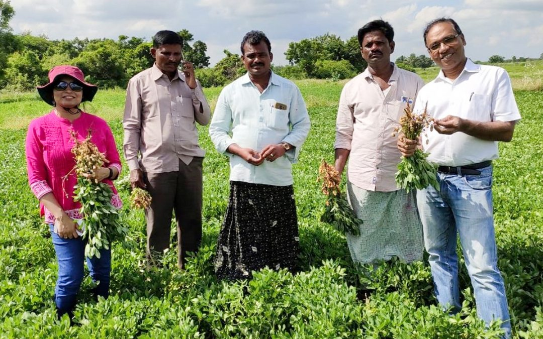 India groundnut farmers' seed business debut yields big profits