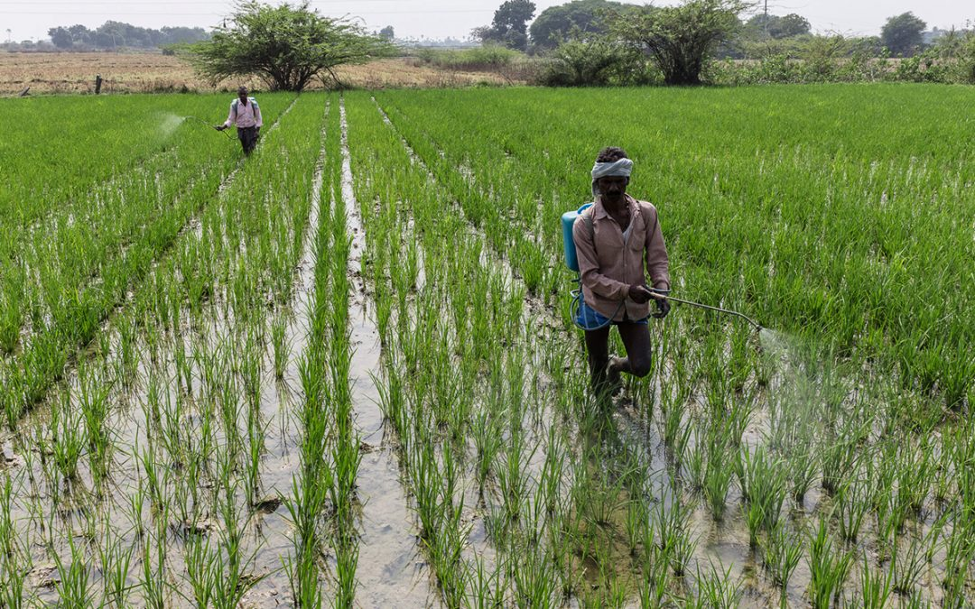 Does the smallholder farmer have access to quality inputs?