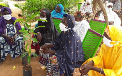 Seven villages, 700 women, one story: Plant nurseries in Niger are changing lives
