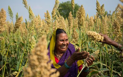Seed consortium to bring improved sorghum to Indian farmers post rains
