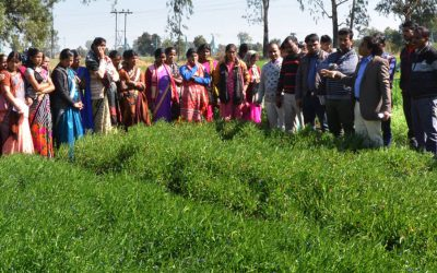 Food from fallows: capitalizing on idle land for better food security in South Asia