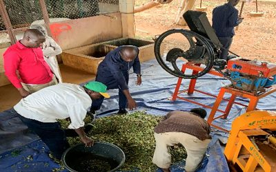 Fodder chopping machines lead to a thriving livestock feed enterprise in rural Niger