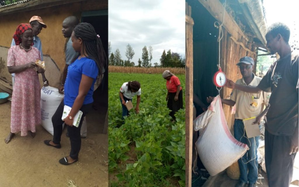 From left to right: Agricultural officer Florence Mwachugha providing farmer-to-farmer crop management training; Smart Logistics, a woman-owned enterprise weighing the seeds for purchase from local women farmers. Photo: CIAT