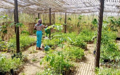 Young people in Niger explore different forms of agriculture for a better future