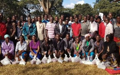 TAAT facilitates access to quality High Iron Bean Seed in Malawi