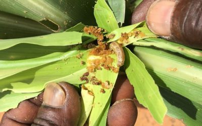 More vigilance, regional cooperation needed to check emerging plant health threats
