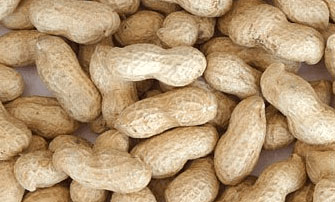 CSIR-SARI introduces high yielding groundnut varieties to farmers