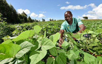Putting digital agro-climatic services in the hands of bean value chain actors