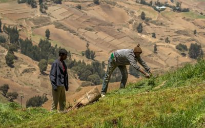 Shining a Brighter Light on Adoption and Diffusion of CGIAR-Related Innovations in Ethiopia