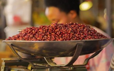 Video: How Iron Beans Gained Ground in Rwanda