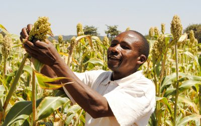 Towards sustainable seed systems in Eastern and Southern Africa