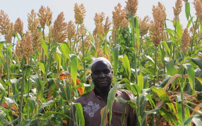 Breaking barriers to uptake of improved sorghum in Burkina Faso, one social media post at a time