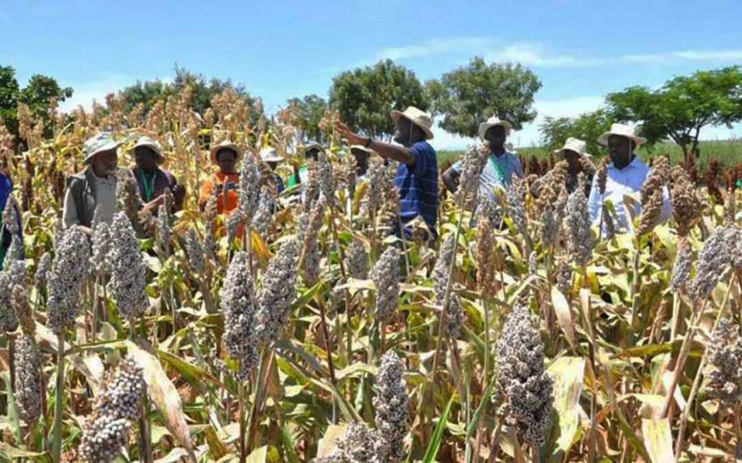 An agri-food system innovation in Kenya? Will smallholders be the winners?
