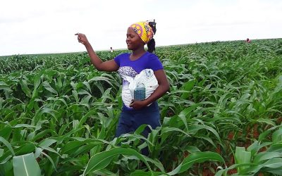 Scaling agricultural innovations to strengthen Africa's food systems, food safety and nutrition