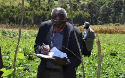 Unlocking the potential of bean production and marketing for improved nutrition and income in Kenya