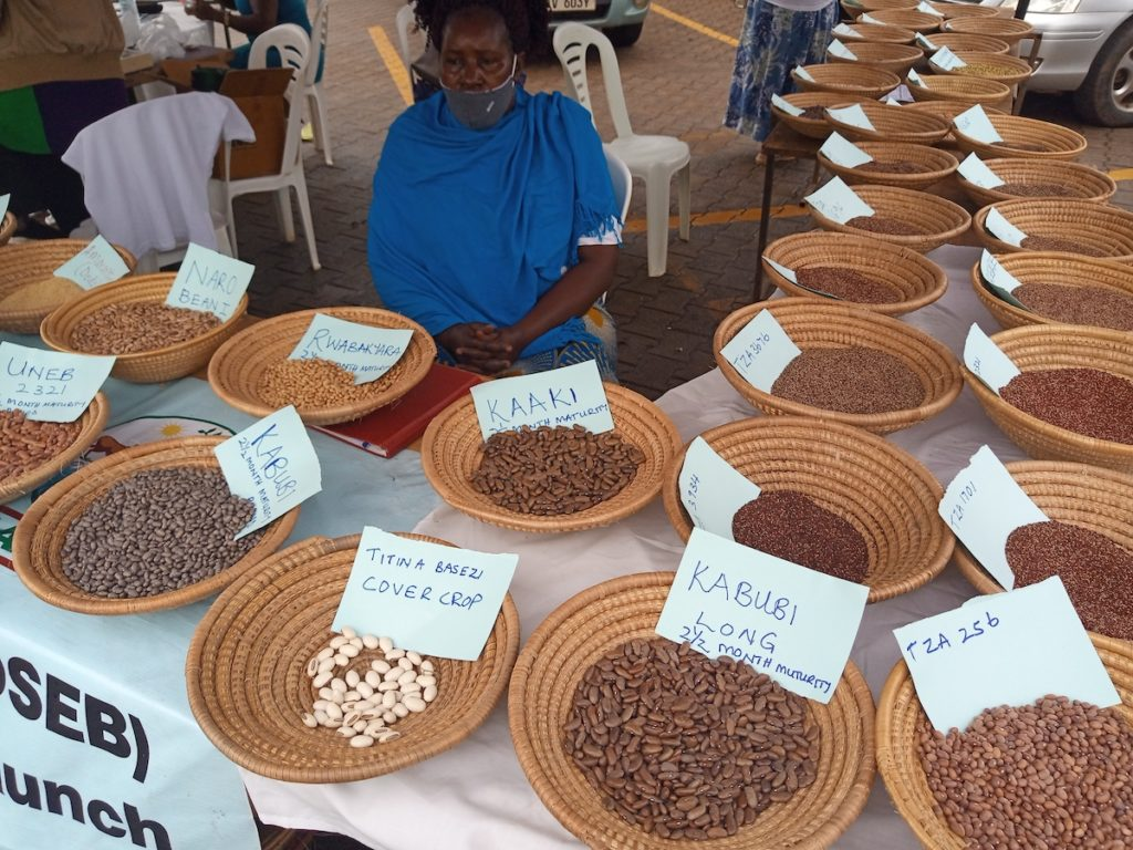 Showcasing diversity of beans and finger millet by Hoima community seed bank during the seed fair. Credit: Alliance of Bioversity International and CIAT/T. Recha