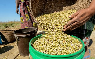 Legumes: a climate-smart option to address Africa's dependence on costly food imports