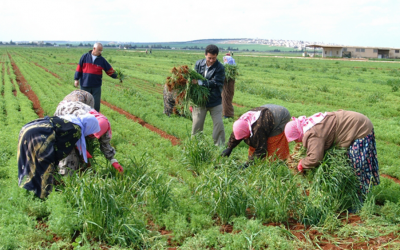 How male outmigration affects women's roles in dryland agriculture