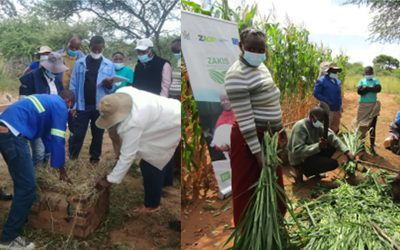 Dryland crop technology to rescue drought-hit crop-livestock farmers in Zimbabwe