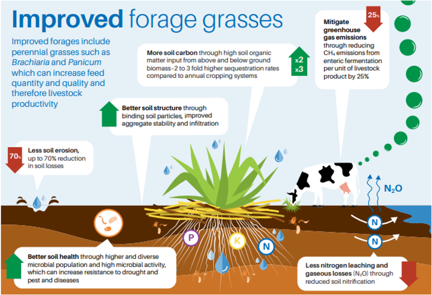 """Extracted from the<a href=""""https://hdl.handle.net/10568/107153"""">Soil and climate benefits of improved forage grasses</a>[Alliance of Bioversity International and CIAT, CGIAR Research Program on Livestock] factsheet, Dec 2019"""