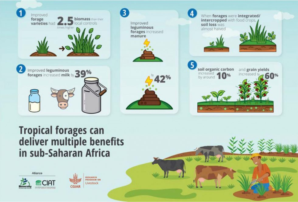 Infographic illustrating the multiple benefits that tropical forages can deliver in Africa. Extracted from Paul [et al] 2020 [Agronomy for Sustainable Development]