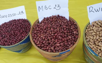 Farmer preferred, market demanded and highly nutritious beans to boost Rwanda's household diets and wealth