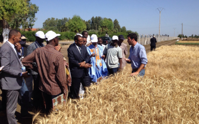 Modernizing crop breeding to safeguard tomorrow's populations